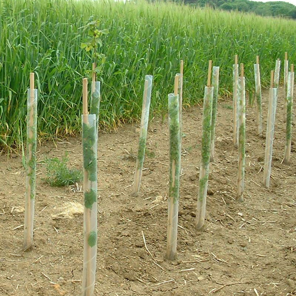 75 Spiral Rabbit Guards plus 75 3ft Bamboo Canes for plant protection