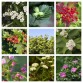 Horse Friendly Hedging Pack