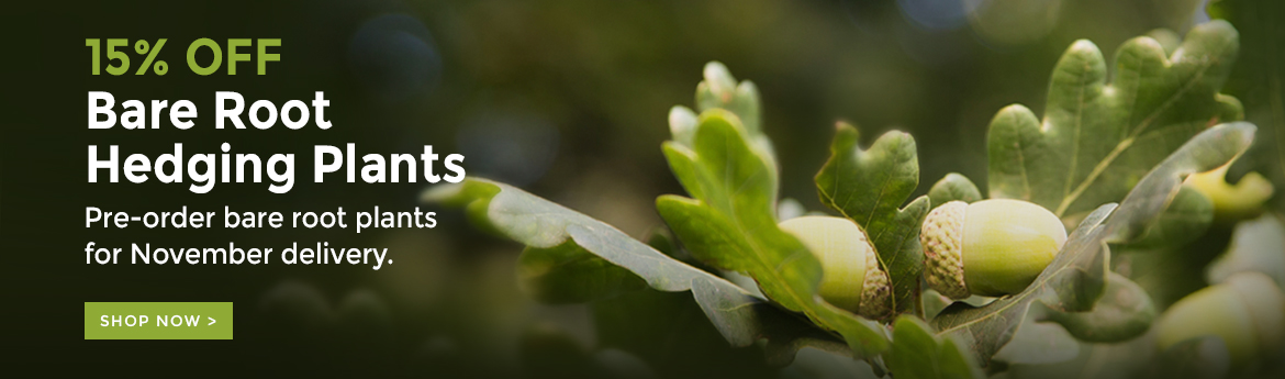 15% Off Bare Root Hedging Plants