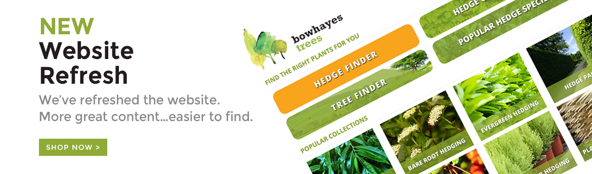 Welcome to the new Bowhayes Trees website which has had a bit of a refresh.