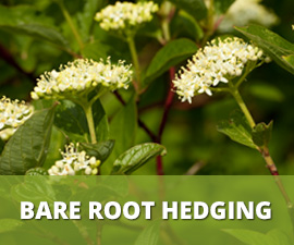 Bar Root Hedging