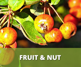 Fruit & Nut Trees