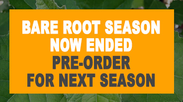 Pre-order Bare Root trees for next season