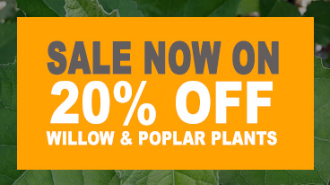Sale Now On - 20% Off Willow and Poplar Trees