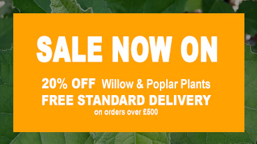 Sale Now On - 20% Off Willow and Poplar Trees and Free Shipping on orders over £500