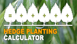 Hedge Planting Calculator