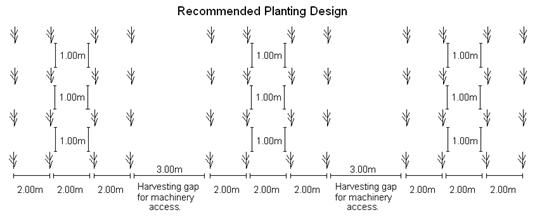 Recommended Planting Design