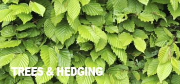 Native Trees & Hedging