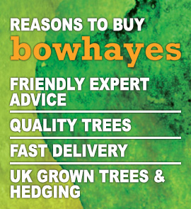 Reasons to buy from Bowhayes