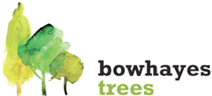 Bowhayes Trees Online Store